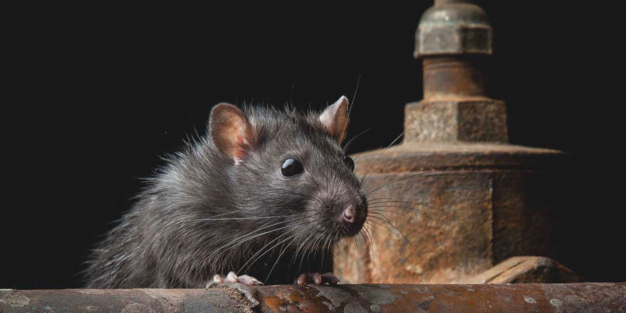 4 Reasons To Consider Pest Control Services